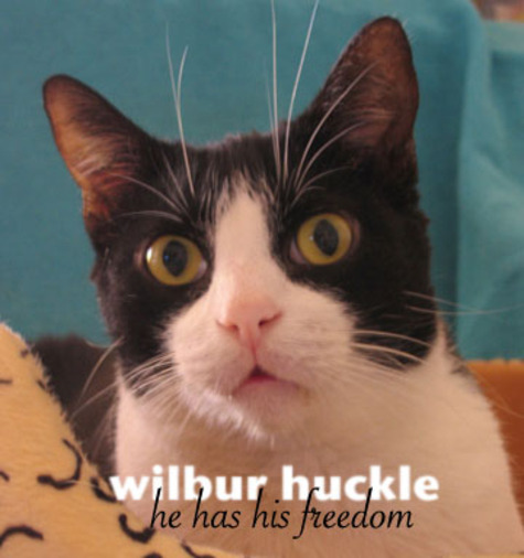 Wilbur_huckle_he_has_his_freedom